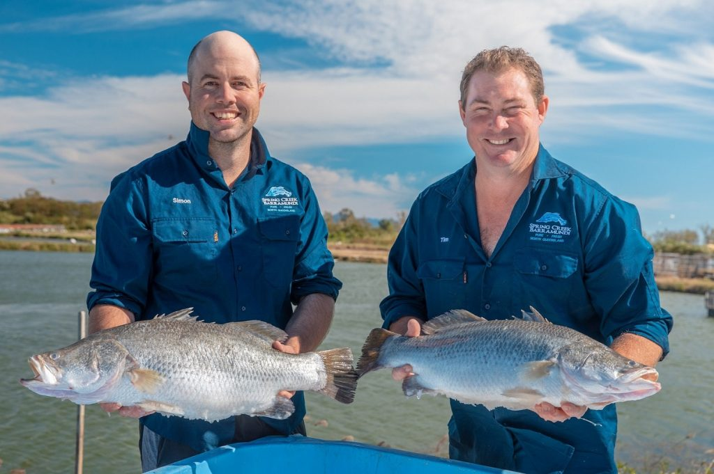 Spring Creek Barramundi